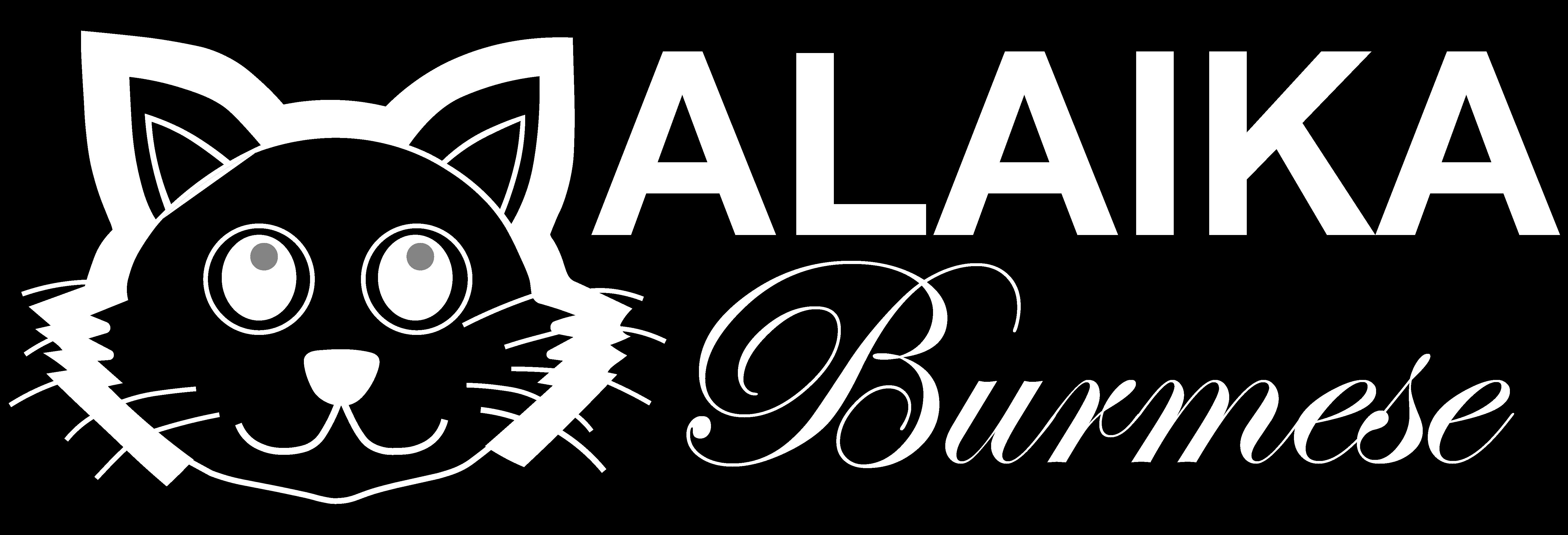 Malaika Burmese