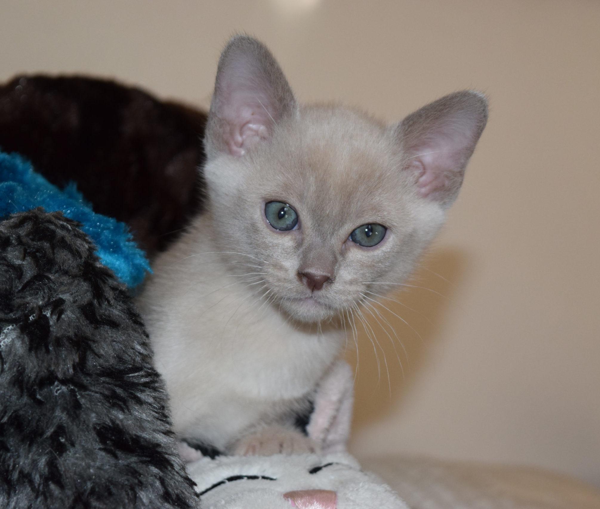 Cute Kitten Gallery